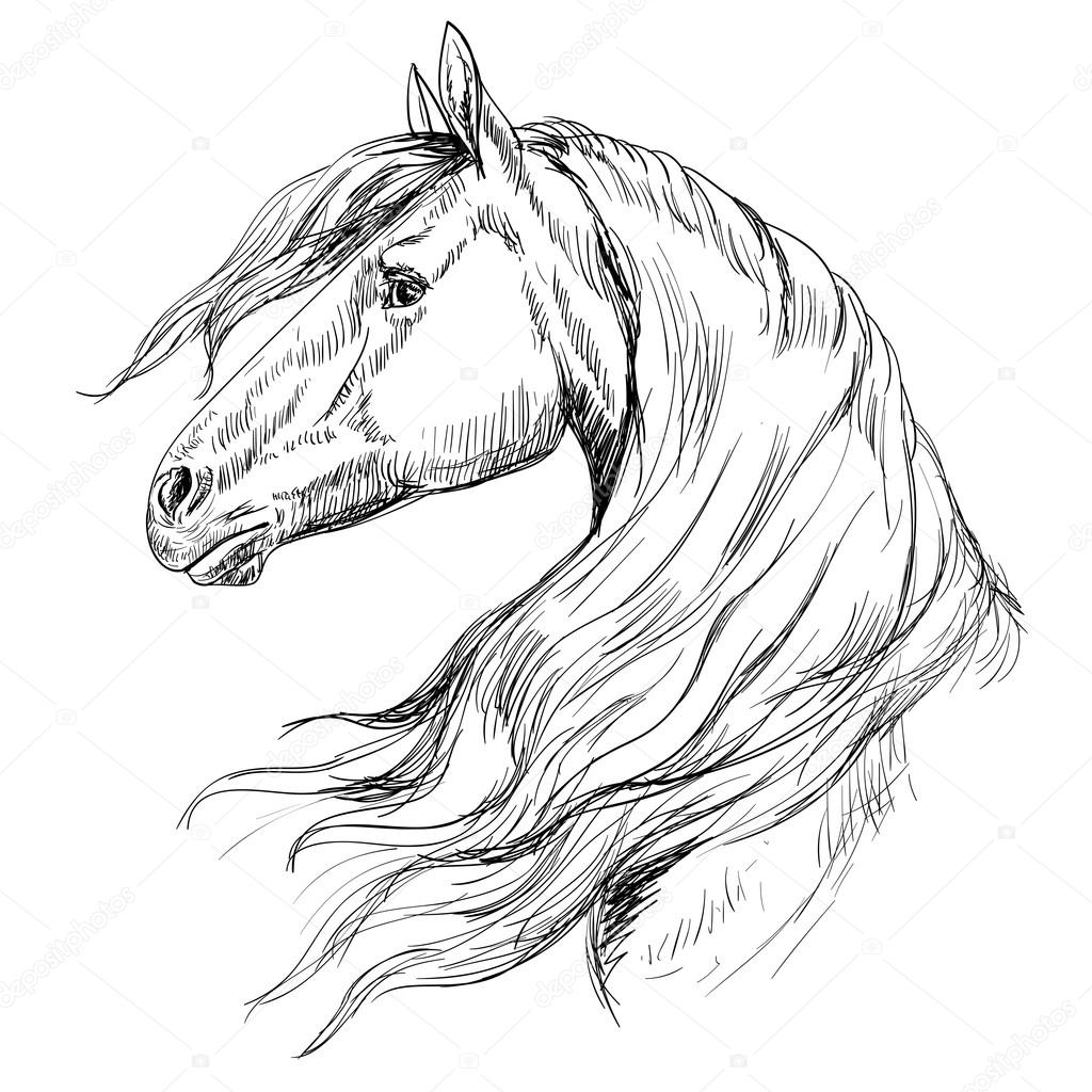1024x1024 Horse Head Outline Group