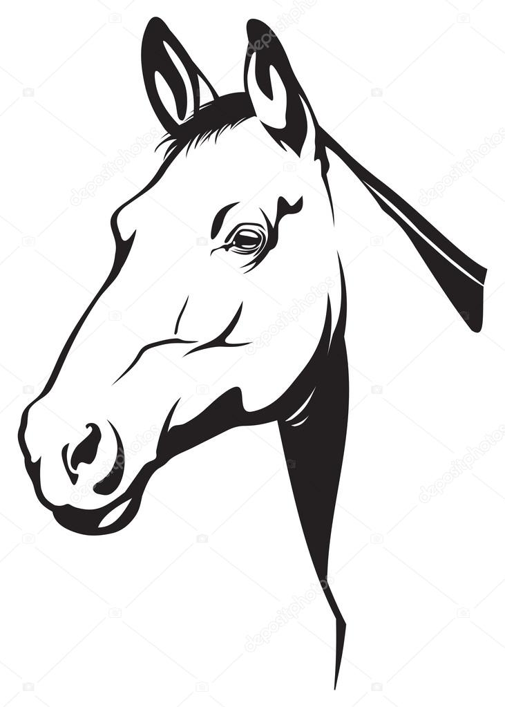 731x1023 Horse Head Drawing Stock Photos, Royalty Free Horse Head Drawing