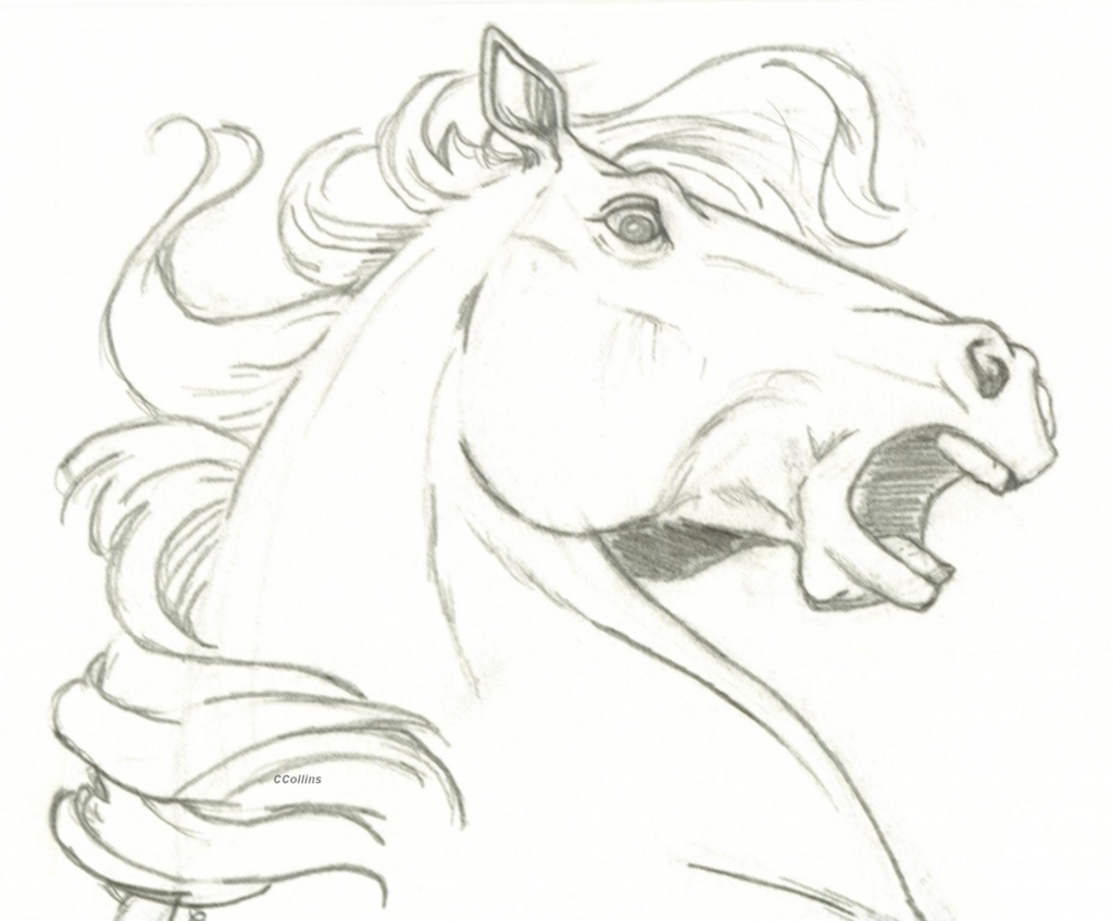 1024x847 How To Draw A Horse Head Horse Head Surprise Ccangel33