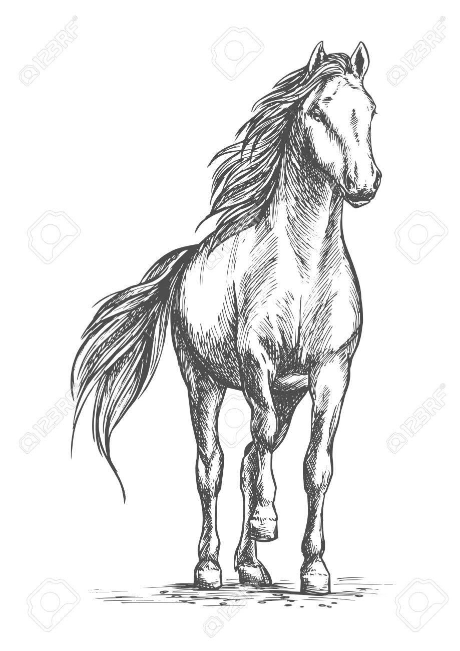 919x1300 Sketched Vector Portrait Of Horse. White Mare Horse Pacing
