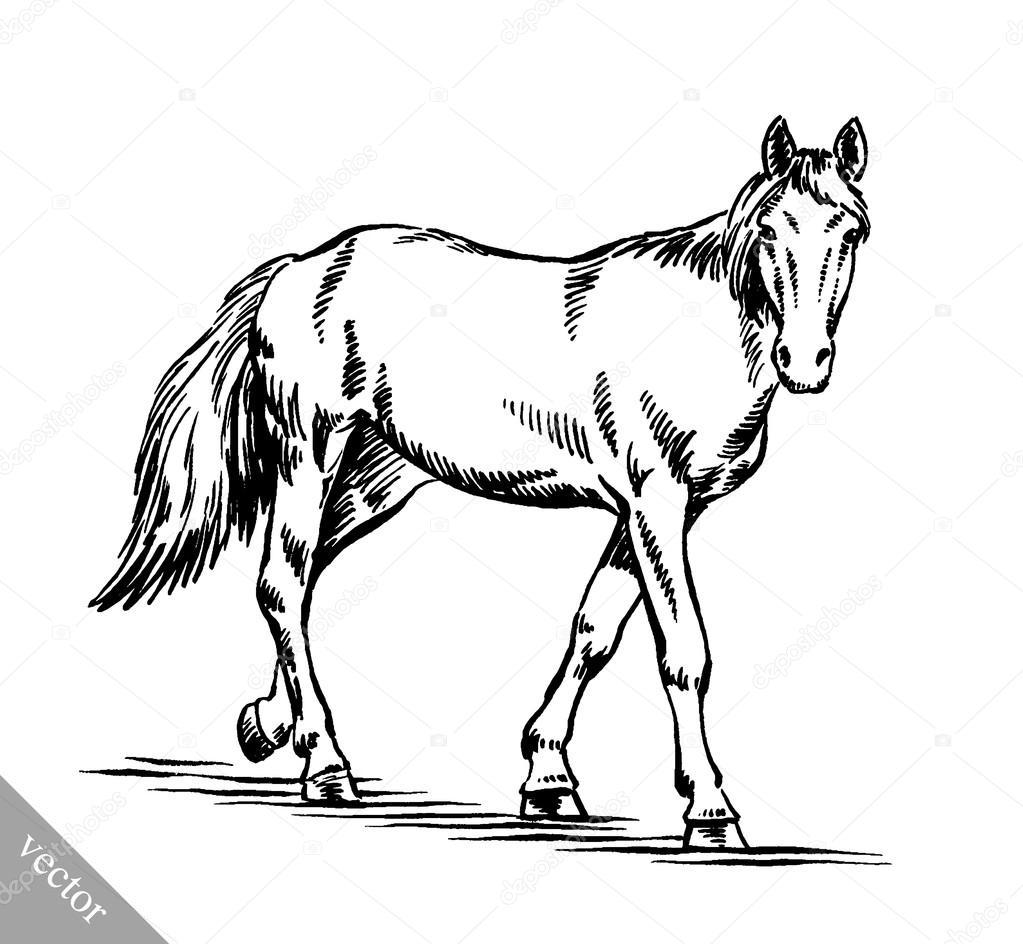 1023x944 Engrave Ink Draw Horse Illustration Stock Vector Turaevgeniy