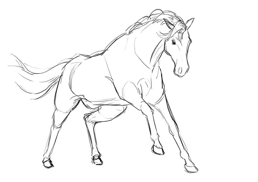 900x636 Horse Aj Aiken