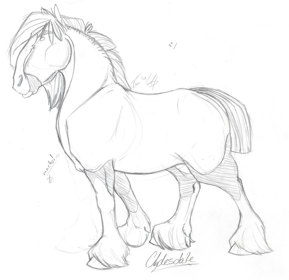 1000x970 Clydesdale Sketch By Taa