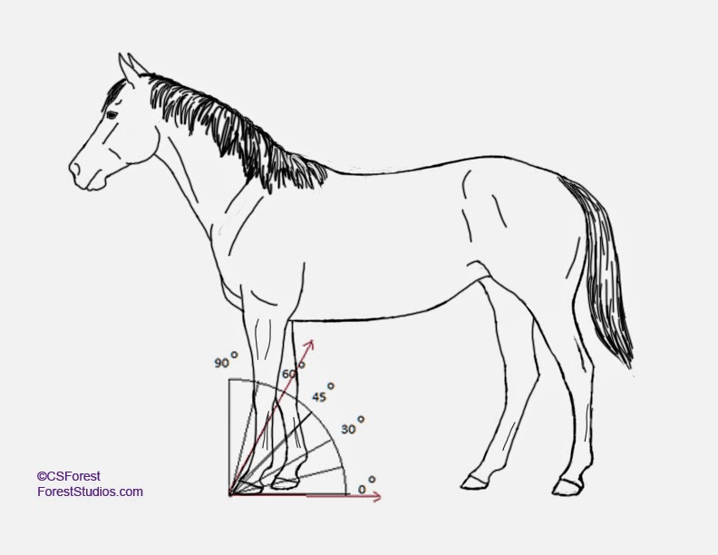 792x612 Forest Wildlife Art How To Draw Animals