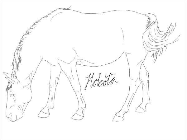 Horse Image Drawing