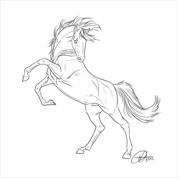 Horse Images Drawing
