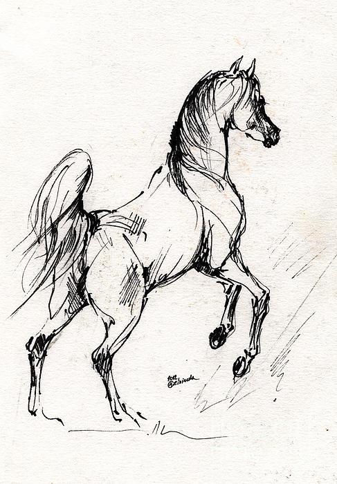 487x700 Horse Sketch