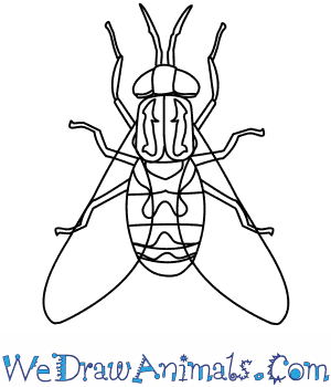 300x350 How To Draw A Horse Fly