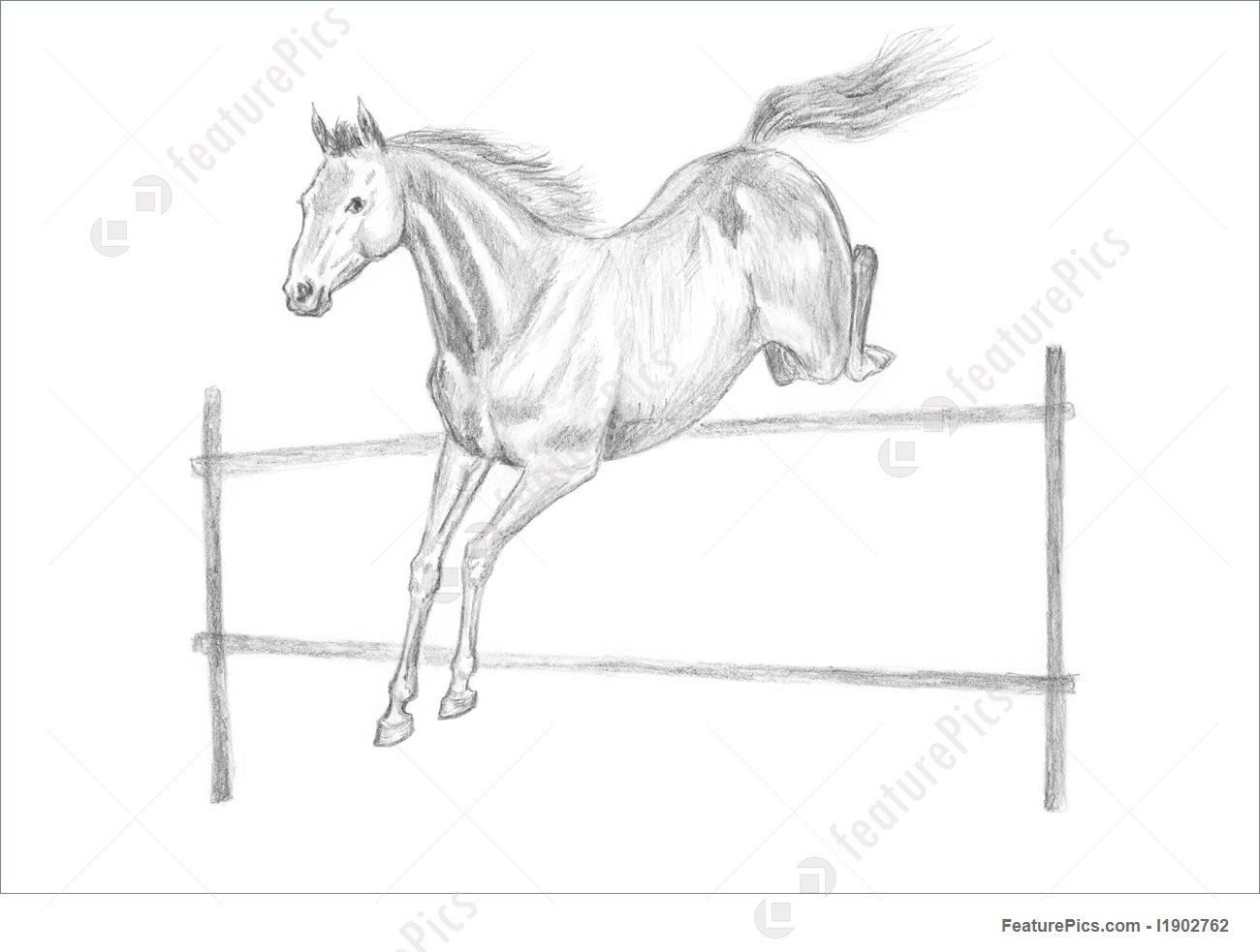 1300x983 Jumping Horse Drawing Picture