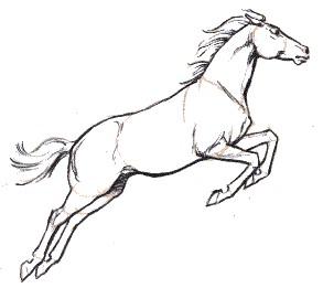 293x261 Framed Drawings Of Horses