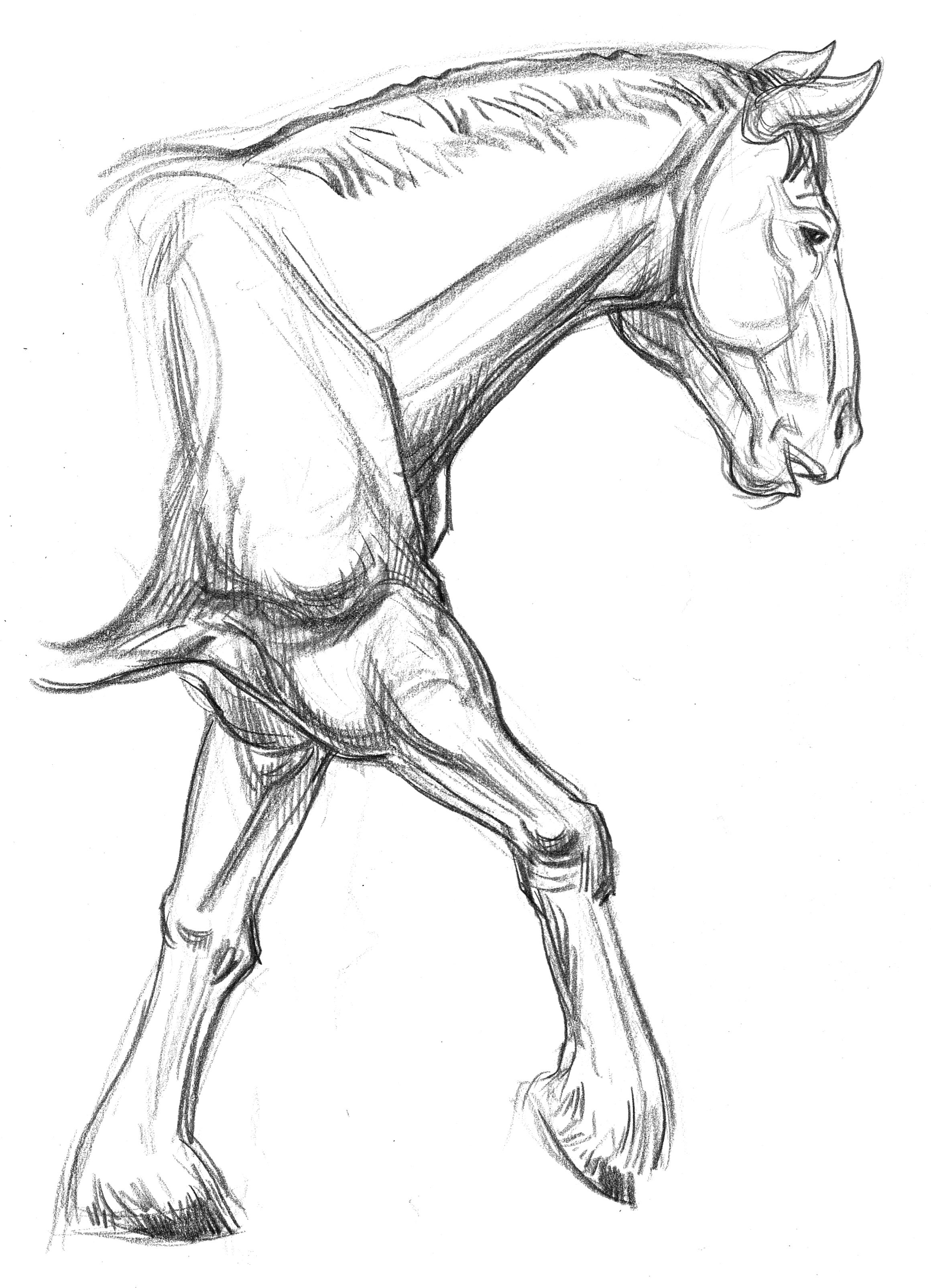 2320x3209 Garygeraths Animal Drawing