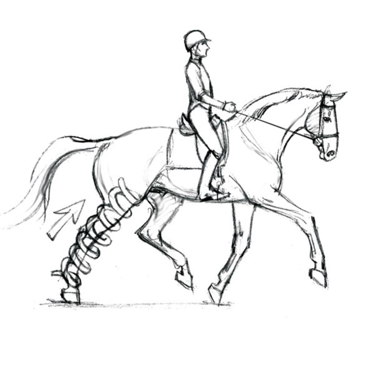 1200x1184 Optimizing Your Dressage Horse's Soundness From The Saddle