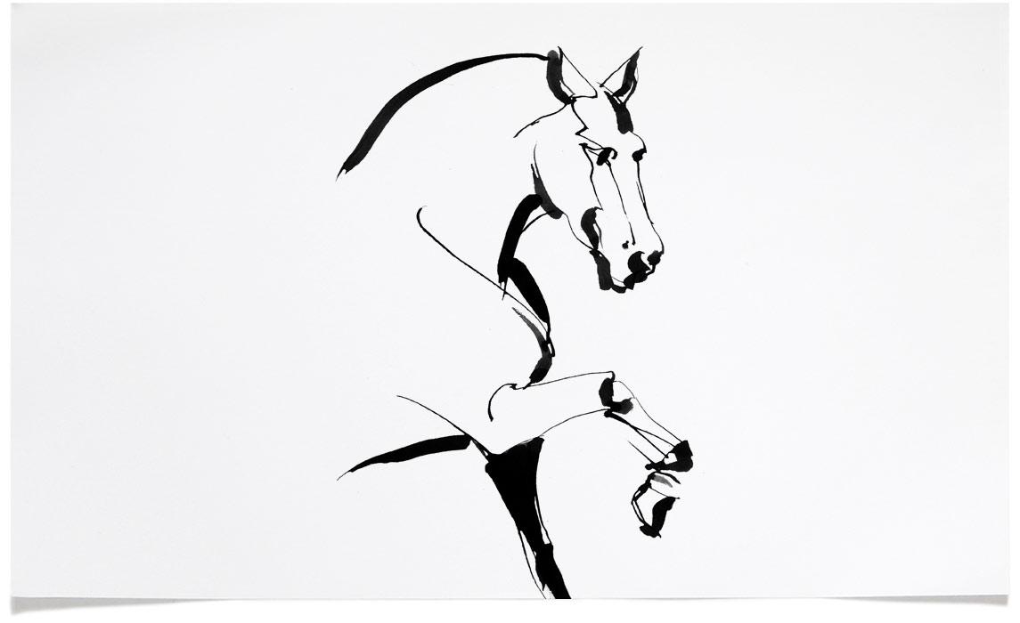 1145x700 Horse Illustrations Eri Griffin Pen Amp Ink Drawing