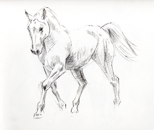 500x422 Ink Sketches