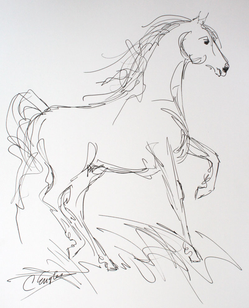 800x989 Morgan Horse, Eight, Ink Drawing By Carol Engles Original Art