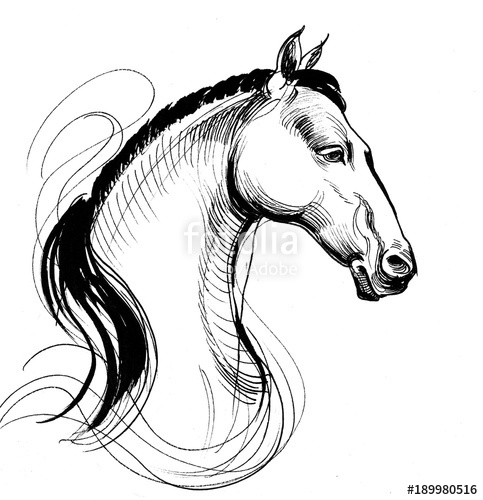 483x500 White Horse. Ink Black White Line Drawing Stock Photo
