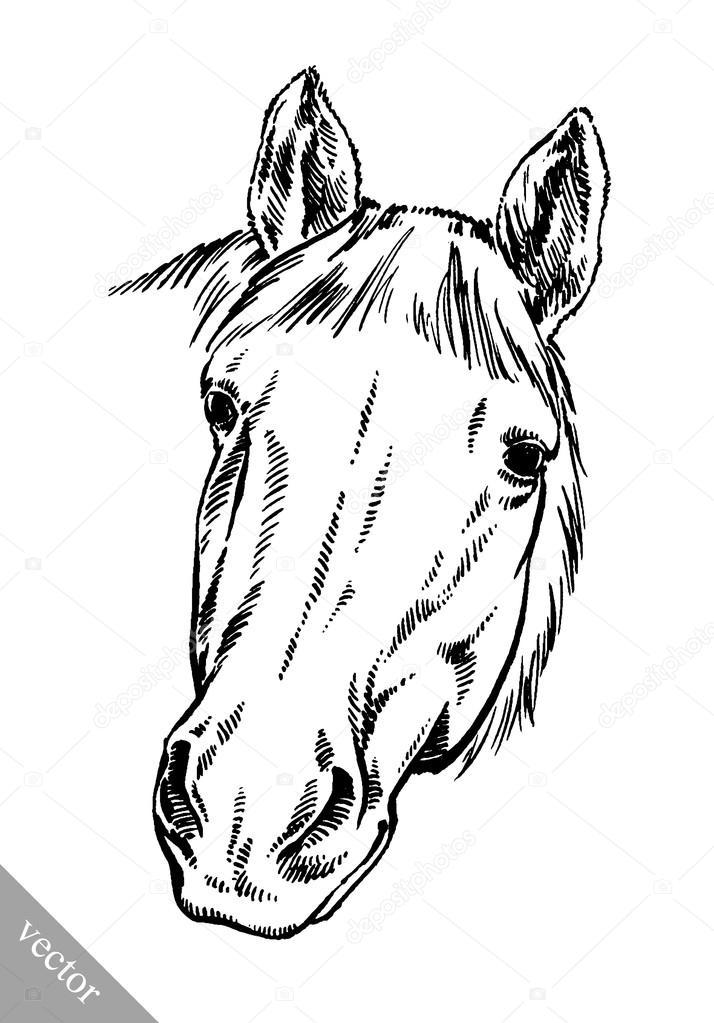 714x1023 Engrave Ink Draw Horse Illustration Stock Vector Turaevgeniy