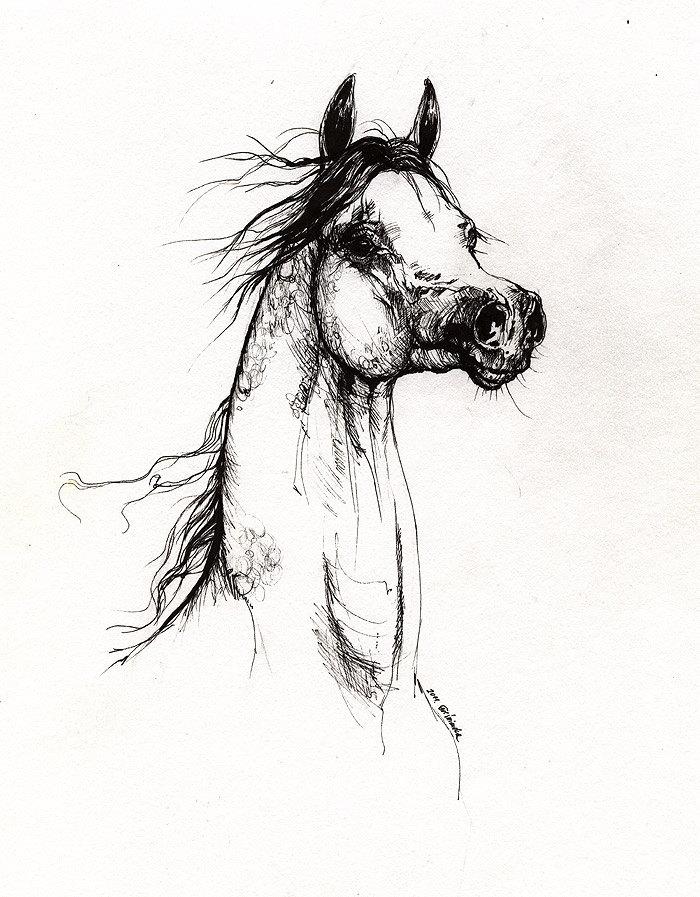 700x897 Arabian Horse Original Pen Drawing