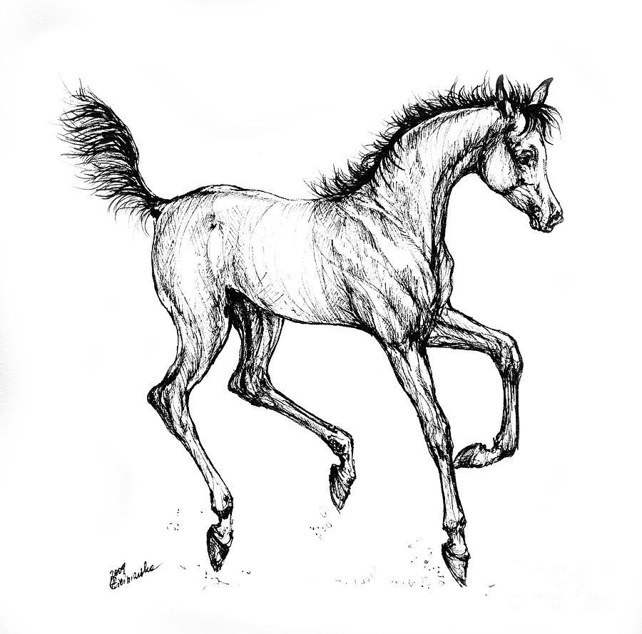 900x889 Horse Jumping Drawings Fine Art America