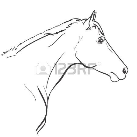 450x450 Horse Head Line Art Hand Drawn Illustration. Vector Royalty Free