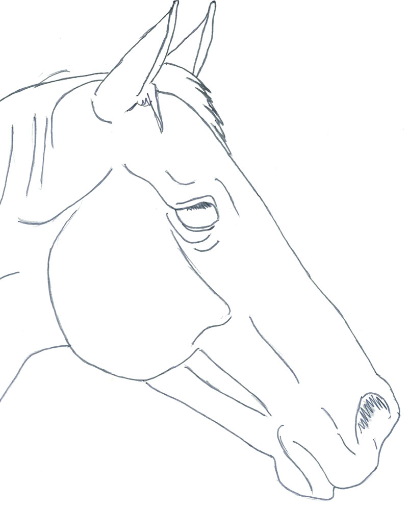 800x1000 Horse Head Pt 1