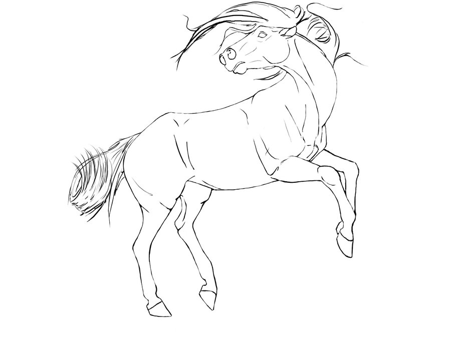 900x675 Rearing Horse Line Drawing