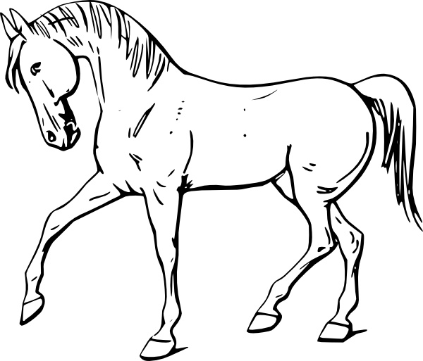Simple Outline Horse Clipart Black And White