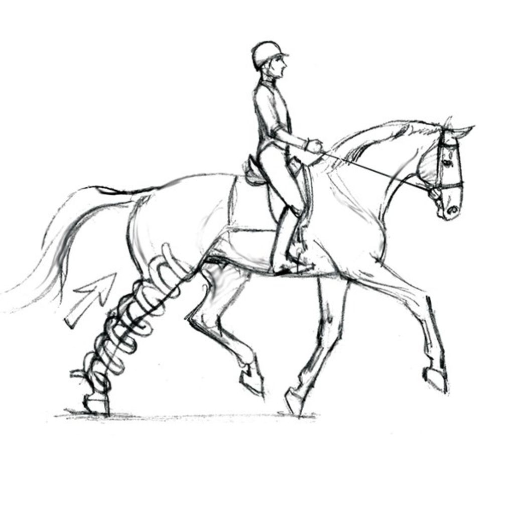1022x1008 Optimizing Your Dressage Horse's Soundness From The Saddle
