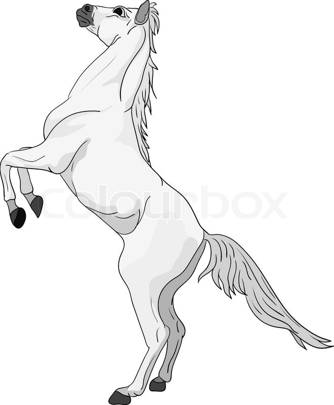 660x800 Vector Horse Standing On Hind Legs Stock Vector Colourbox