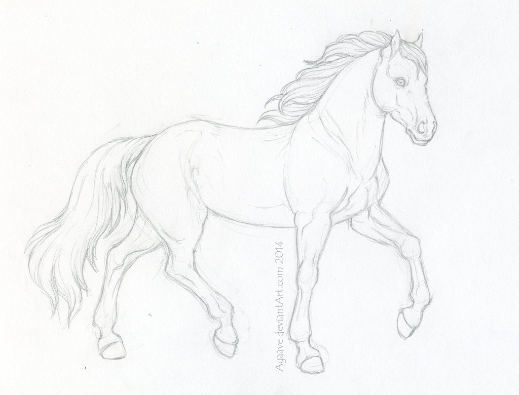 1024x780 Wip Horse Sketch By Agaave