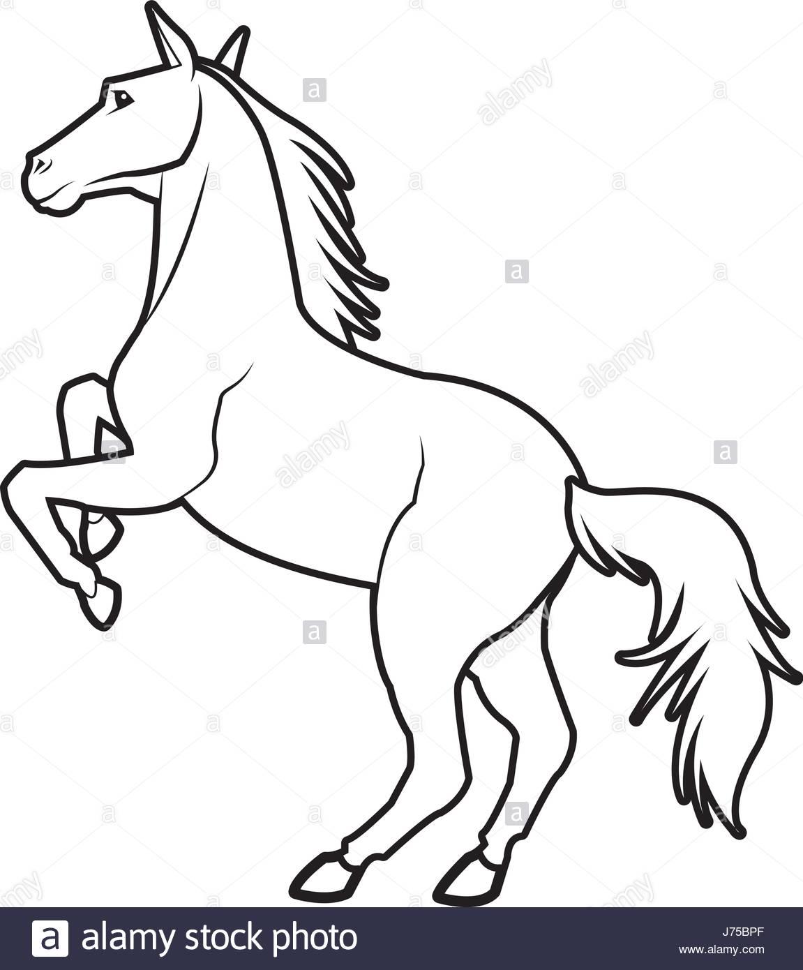 1151x1390 Horse On Two Legs Equine Animal Line Stock Vector Art