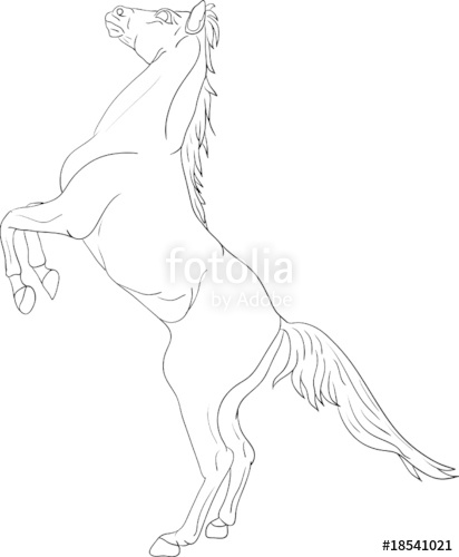 412x500 Vector Horse Standing On Hind Legs Stock Image And Royalty Free