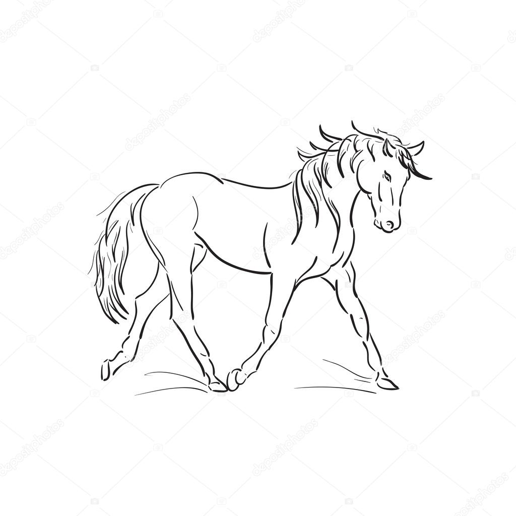 1024x1024 Running Horse Vector Outline Stock Vector Anutaray