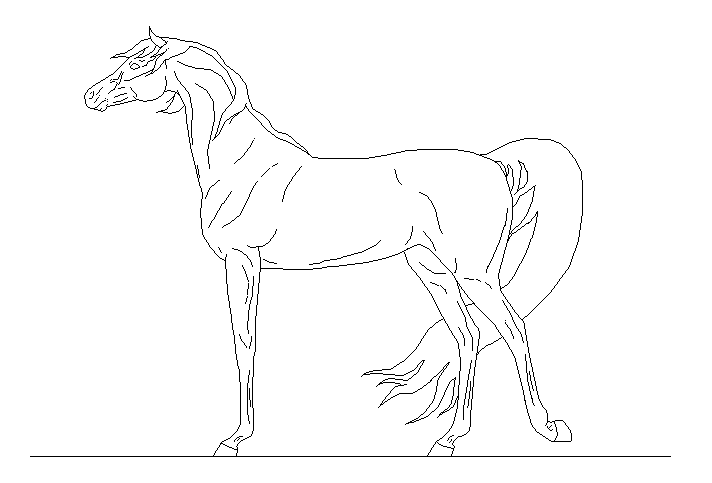 712x483 Arabian Horse Outline Drawing