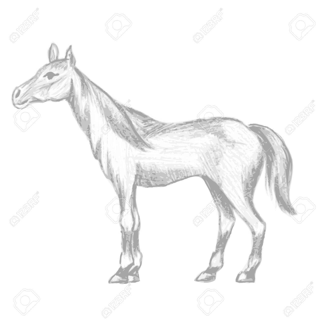 1300x1300 Hand Drawn Horse, Pencil Drawing Of Mare With Long Mane And Tail