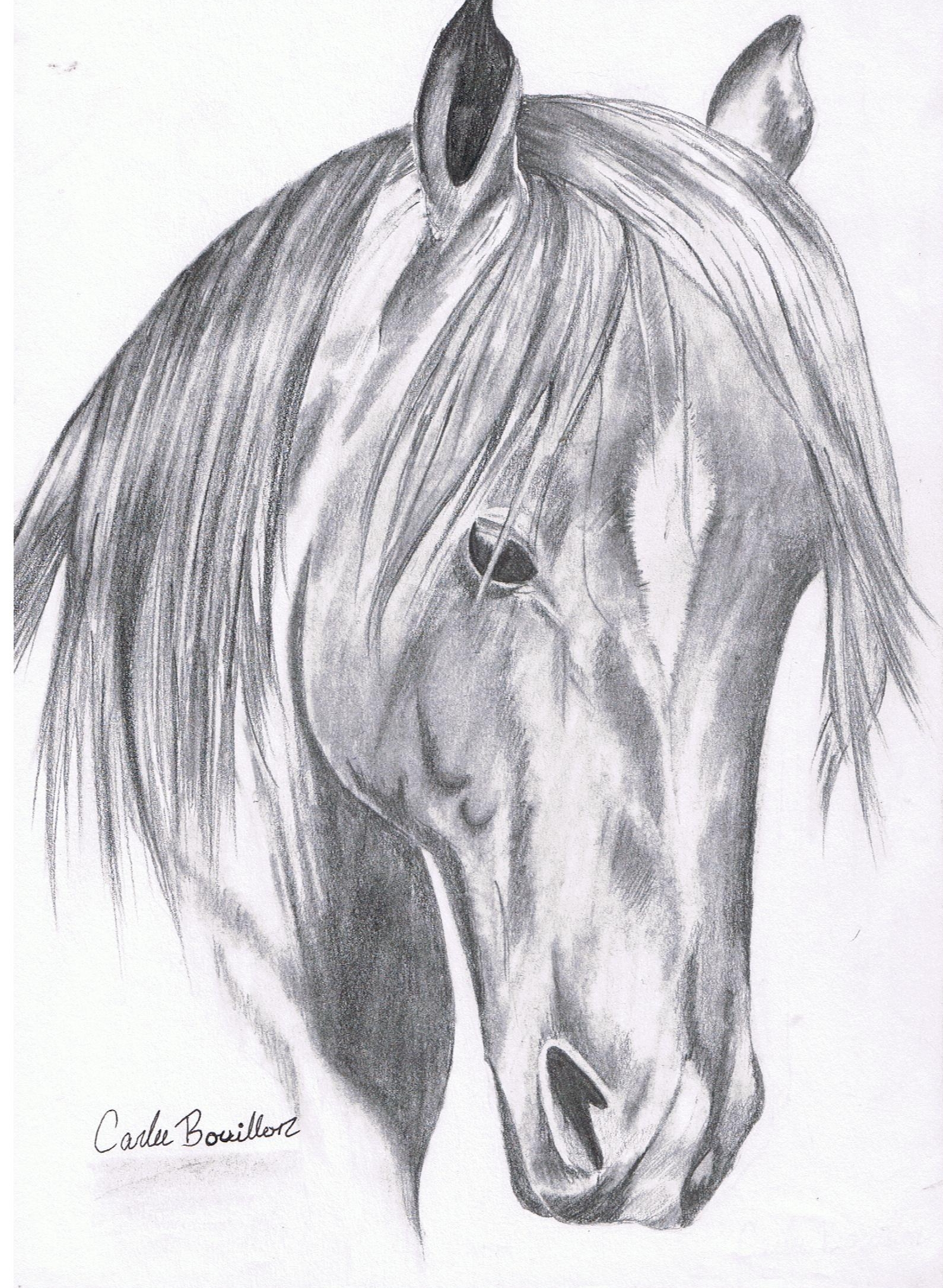 1589x2171 Drawing 50 Horses Before You Call Page 2
