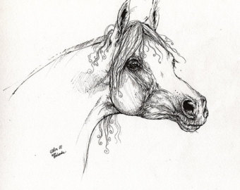 Line Art Portrait : Horse portrait drawing at getdrawings free for personal use