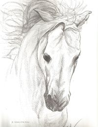 200x258 Horse Portrait Of A Grey Arabian Stallion Done In Pencil