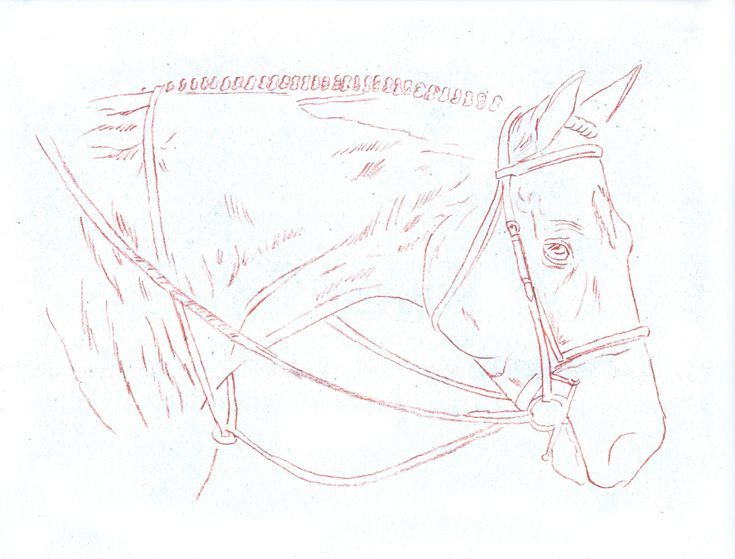 735x559 Learn How To Draw A Stunning Horse Portrait Horse Head, Horses
