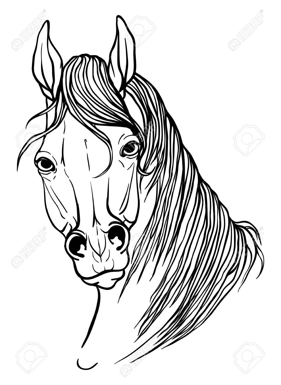 950x1300 Page Coloring Portrait Of A Horse Royalty Free Cliparts, Vectors