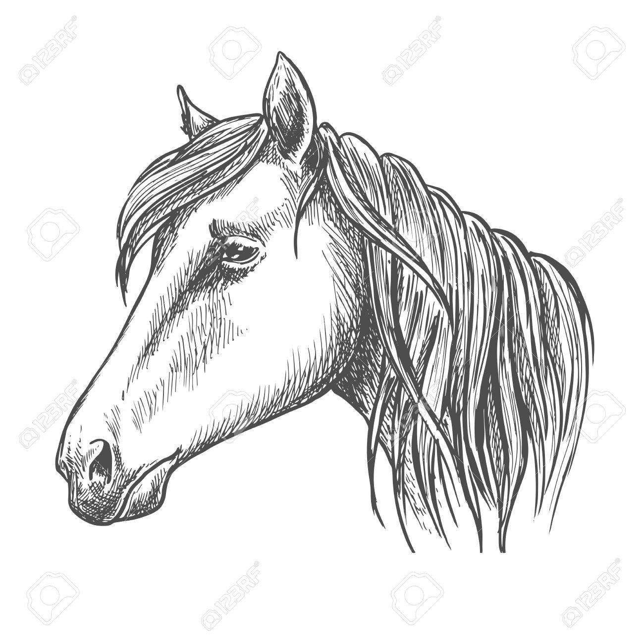 1300x1300 Riding Horse Head Sketch With Long Mane. Horse Racing, Equestrian