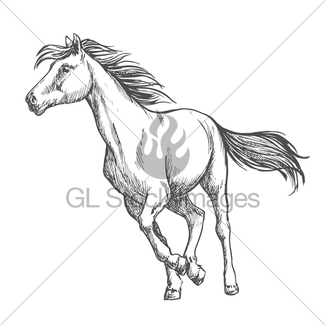 325x325 Running Gallop White Horse Sketch Portrait Gl Stock Images