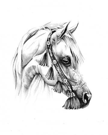 359x450 Unicorn Horse Sketch With Horn Stock Vector Seamartini