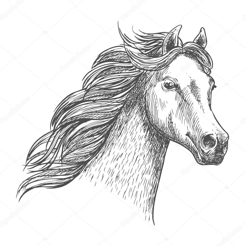 1024x1024 White Graceful Horse Sketch Portrait Stock Vector Seamartini