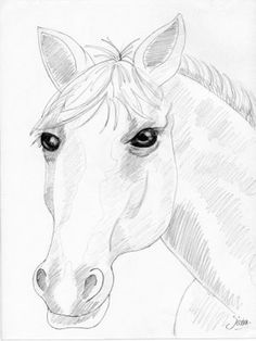 236x314 Easy How To Draw A Horse Head Step By Step