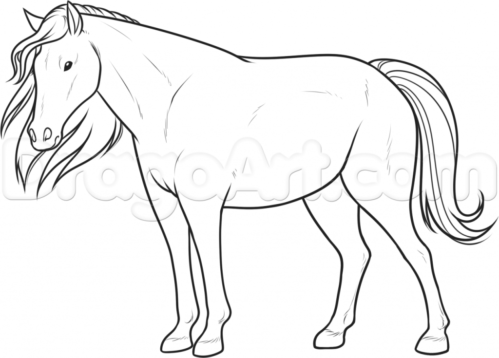 1024x735 Horse Picture Drawing Best Photos Of Horse Profile Drawing Horse