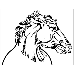 300x300 Horse Profile Coloring Page