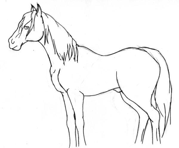 600x497 Horse Profile By Fovena