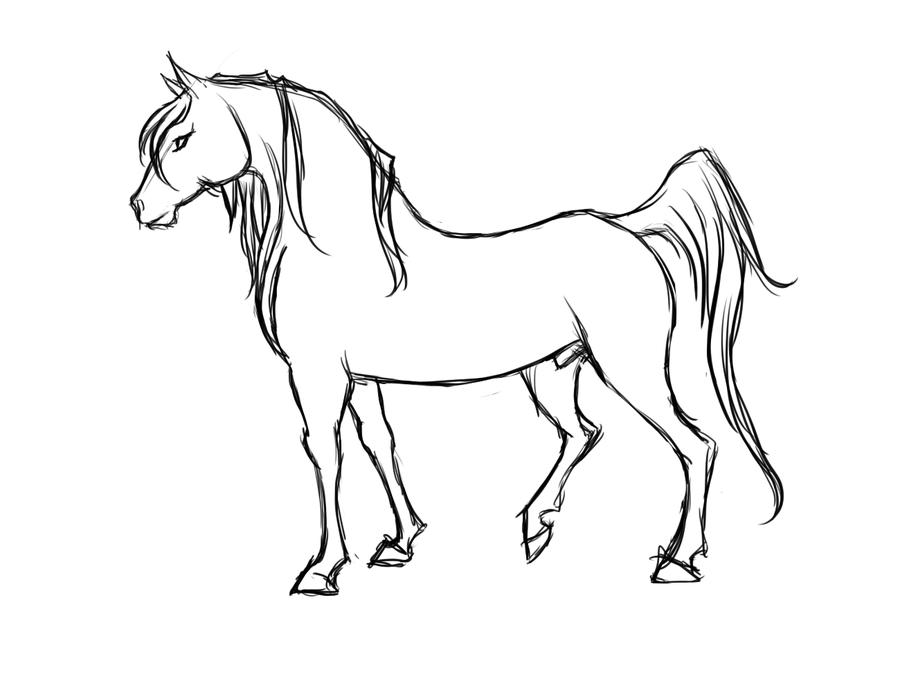 900x692 Horse Profile By Kieraghearts