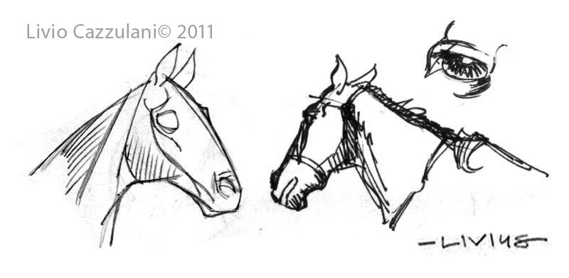 800x392 Horses And Women Livius' Notes
